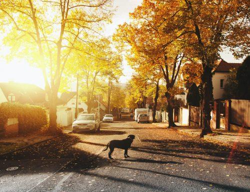Miejsce zamieszkania a miejsce zameldowania – na czym polega różnica?