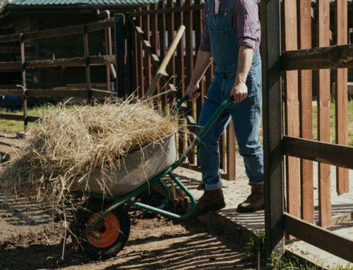 Czy wiesz kto ponosi odpowiedzialność za długi spadkowe związane z prowadzeniem gospodarstwa rolnego?